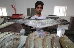بهره برداری از بزرگترین طرح پرورش ماهی در قفس + فیلم