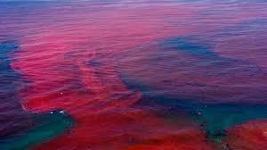 پدیده کشند قرمز در آبهای کیش