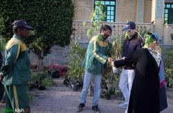 توزیع نهال رایگان در کیش به مناسبت روز درختکاری