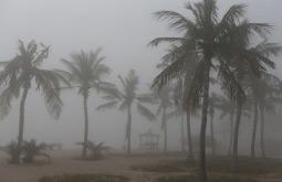 هرس غیر اصولی و قطع درختان، ممنوع