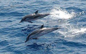 ویدئو | لحظه تولد دو دلفین در پارک دلفین