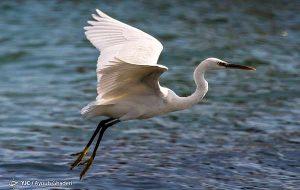 عکس | پرندگان مهاجر به کیش