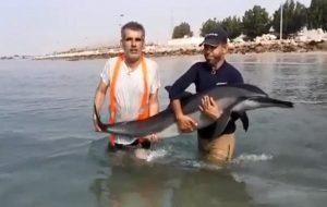 فیلم | نجات دلفین مادر و بچه به گِل نشسته