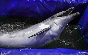 انتقال تنها دلفین برج میلاد به کیش/ «کاسیا» پس از سفر ۴۰ساعته وضعیت مناسبی دارد